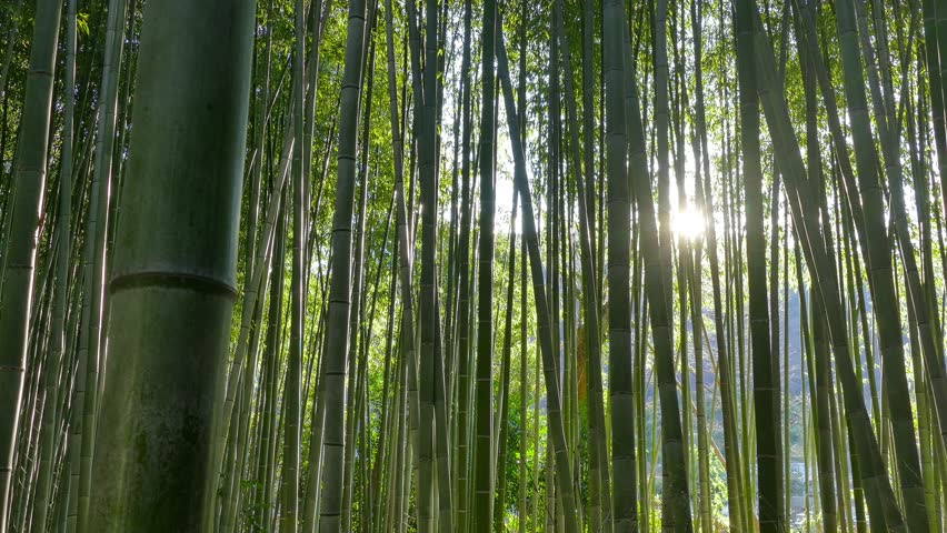 essay about bamboo tree If you plan accordingly and pay attention to what variety you're planting, bamboo can be a great addition to your garden take a look at this article to learn about different varieties of bamboo.