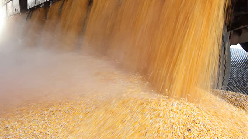 Loading Corn into the Silo | Shutterstock HD Video #1488121