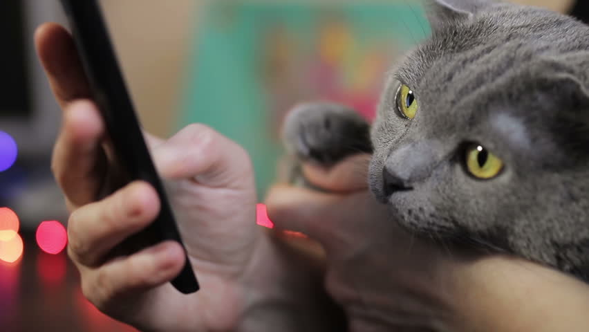 girl with a smartphone and a British cat in her arms