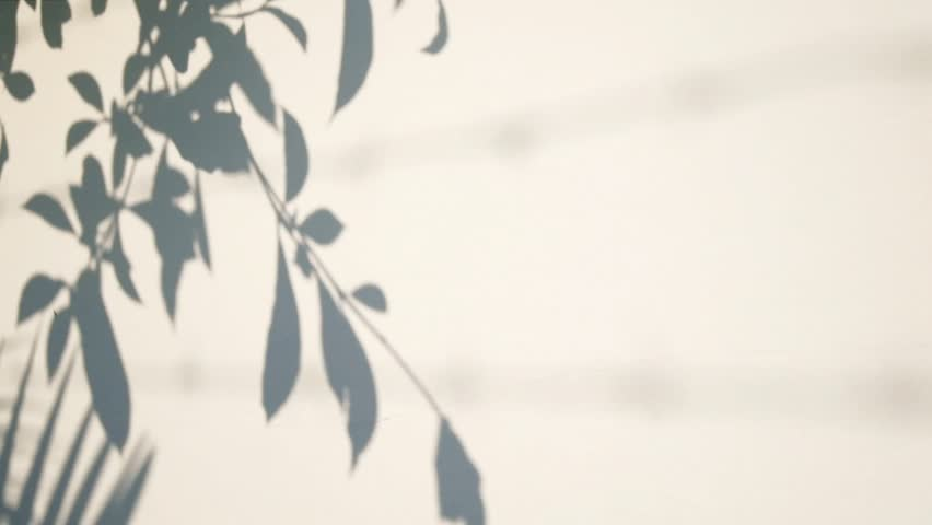 Silhouette shadow of leaves motion by natural wind on white wall #14985154