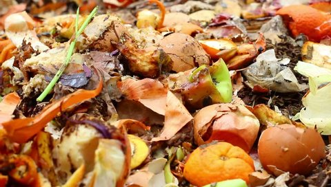 Food Waste. Composting food scraps at home. A bin containing biodegradable waste: peels of potato, onion, lemon, tangerine, banana, kiwi, egg