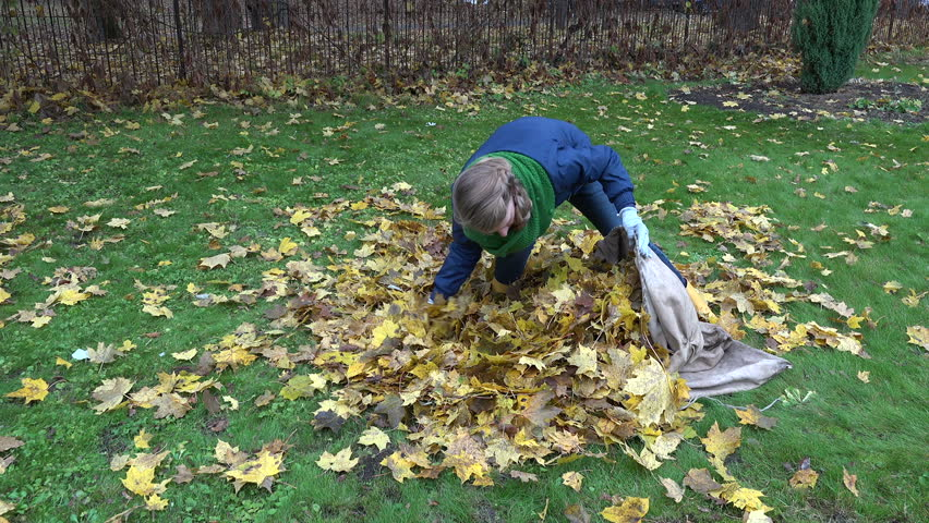 woman stuffing dry leaves into material bag sack in autumn garden. Static shot.