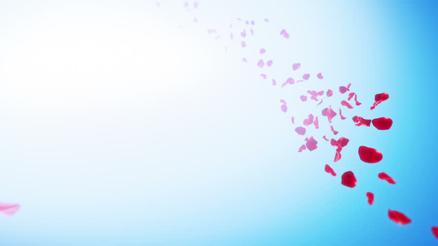 Sakura Petals Sky Background (Loop). Calm background with flying petals stream and copy space. Seamlessly loopable.
