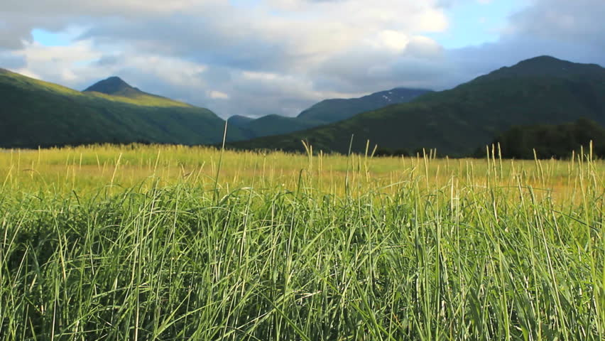 tall green grass field. Tall Field Of Green Grass Blows In Wind Flanked By Scenic Mountains, Clouds, Blue Sky On Kodiak Island, Alaska. 1080p Stock Footage Video 1523167   T