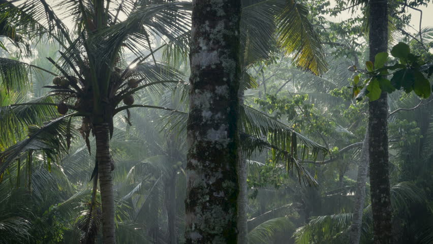 Rain Shower And Palm Tree Stock Footage Video   Shutterstock
