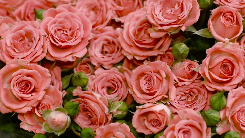 Big bouquet of pink roses pink flower flowers many - Big rose flower wallpaper ...