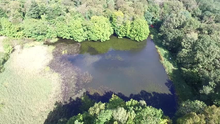 Aerial: Autumn of primeval forest