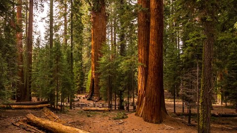 Timelapse view of Sequoia National Park and General Sherman Tree