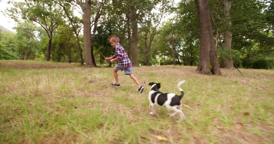 Little boy and dog playing with stick together in park. The two mischievous friends running around