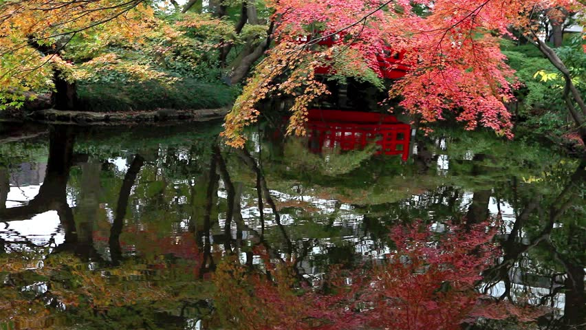 japanese garden in autumn with pond and red bridge tokyo japan hd stock