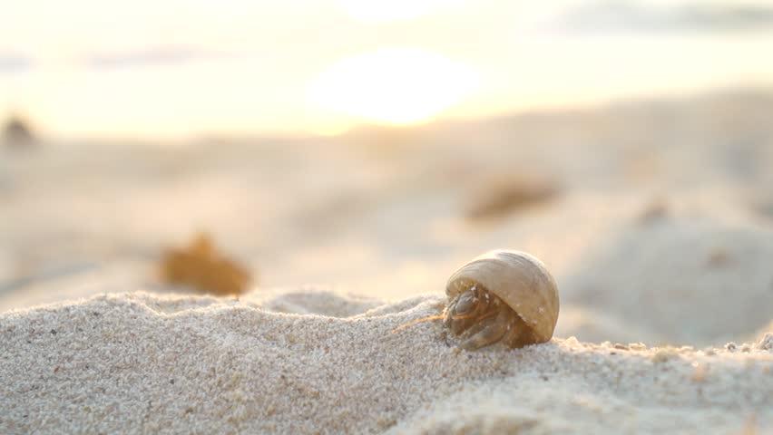 CLOSE UP: Hermit crab on the sandy beach