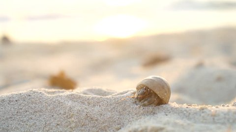CLOSE UP: Hermit crab on the sandy beach