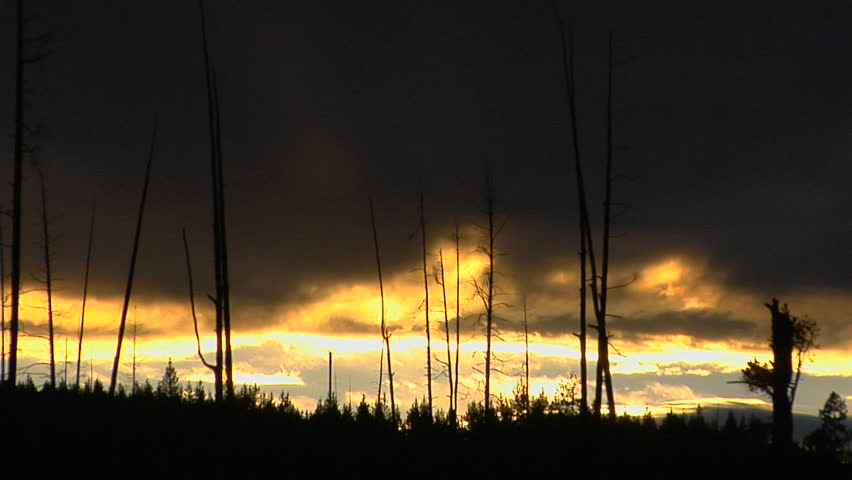 Trees that survived a forest fire in Yellowstone National Park stand in silhouette.. | Shutterstock HD Video #1599817