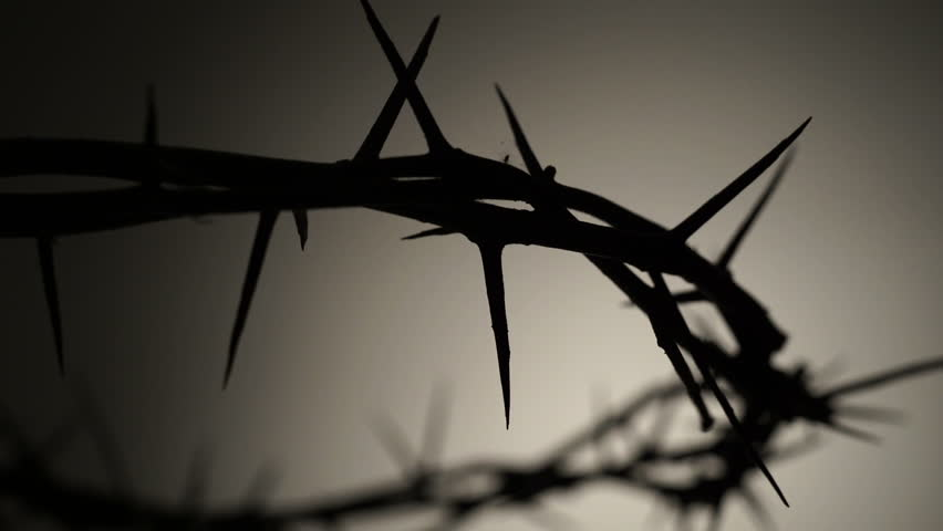 Crown of thorns. Contour. Close shot