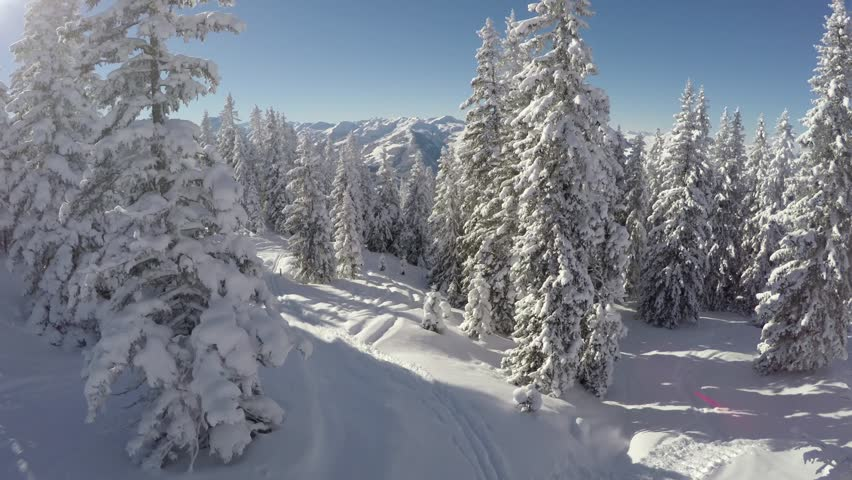 Snowy trees - Aerial shot of a forest on a sunny winter day - Austria #16025917