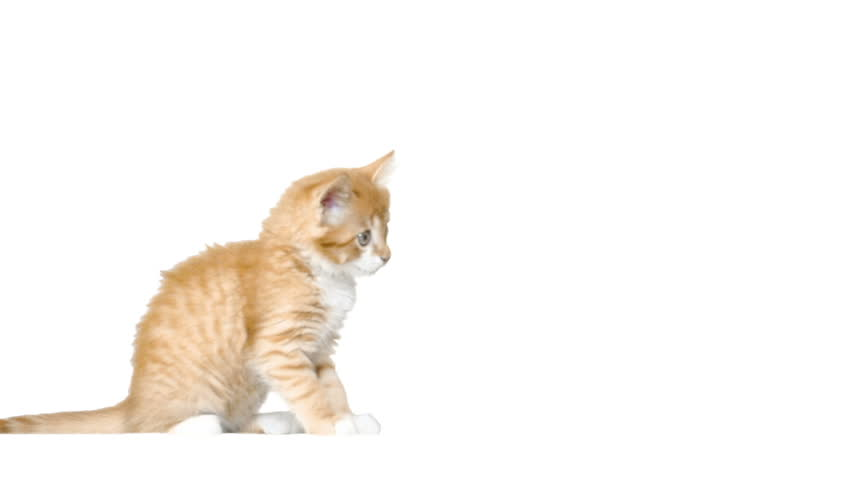 Cute Cat Sitting On A Stock Footage Video 100 Royalty Free 16124527 Shutterstock