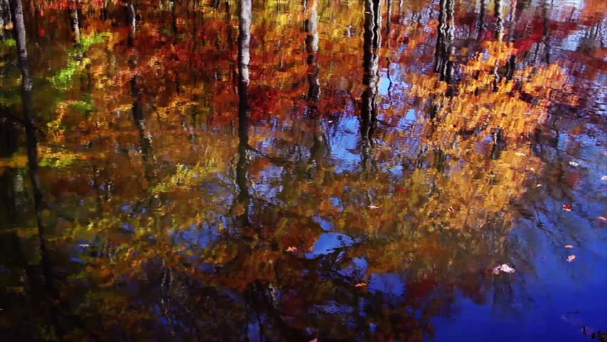 Seamless loop features fall foliage reflected on a pond's surface.