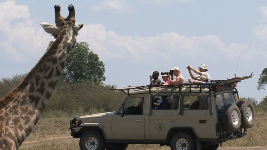 Giraffe in front of safari car with tourists