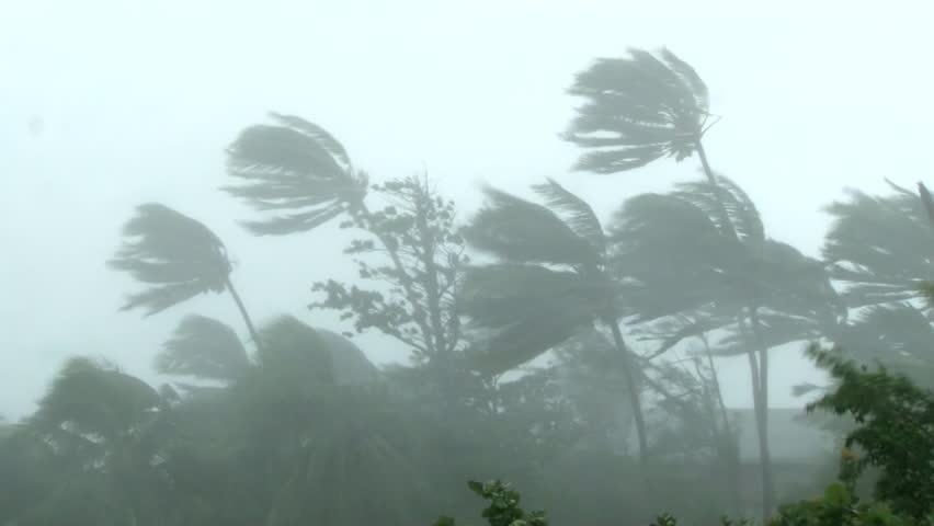 Hurricane wind blows through palm trees