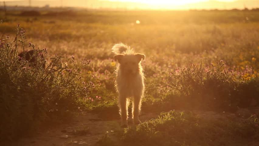 Dog in the evening sun. #1688317