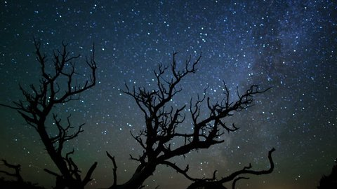 Starlapse with trees