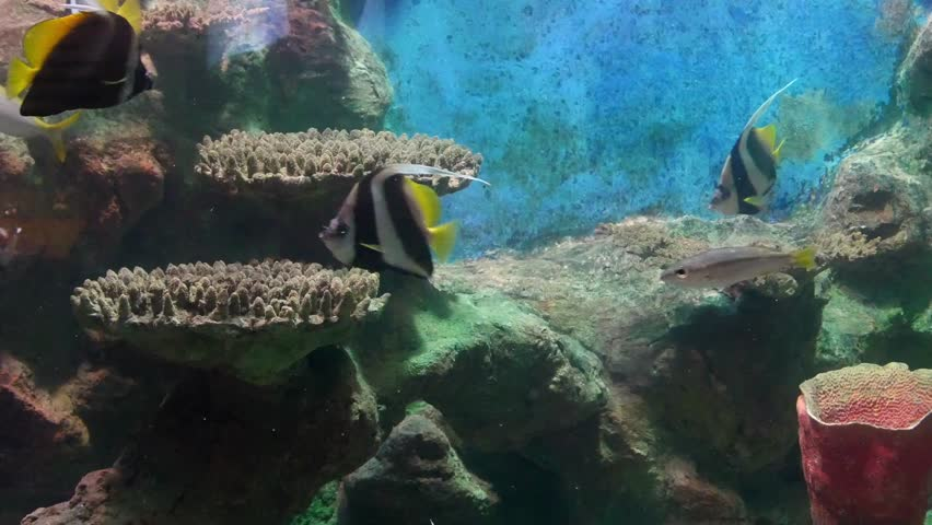 tropical fish and corals underwater #16935697