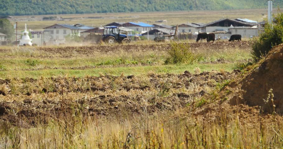 Oct 20,2015:4k tibetan people use farm tractor Arable land in shangrila yunnan,china. gh2_10380_4k