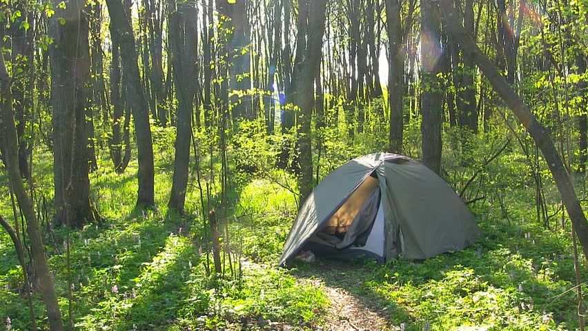 Tourist Tent In Spring Forest. Morning Time. High Quality Of The Forest Sound. Stock Footage Video 17120947 | Shutterstock & Tourist Tent In Spring Forest. Morning Time. High Quality Of The ...