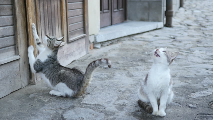 Two funny cute kittens on the street wants to go home