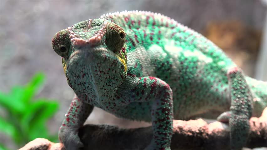 Header of Madagascar