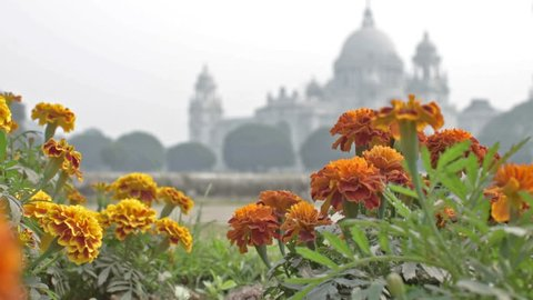 Victoria Memorial, Kolkata , Calcutta, West Bengal, India. A Historical Monument of Indian Architecture. Built between 1906 and 1921. Beautiful flowers in foreground - stock footage.