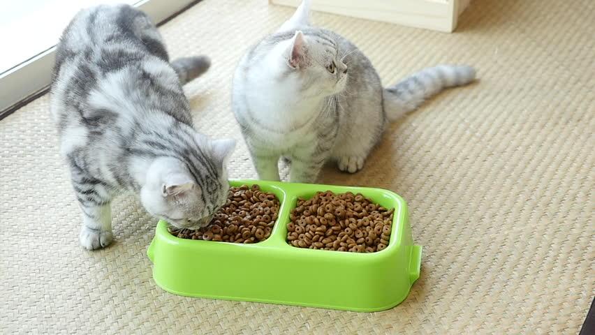 kitten not using litter box