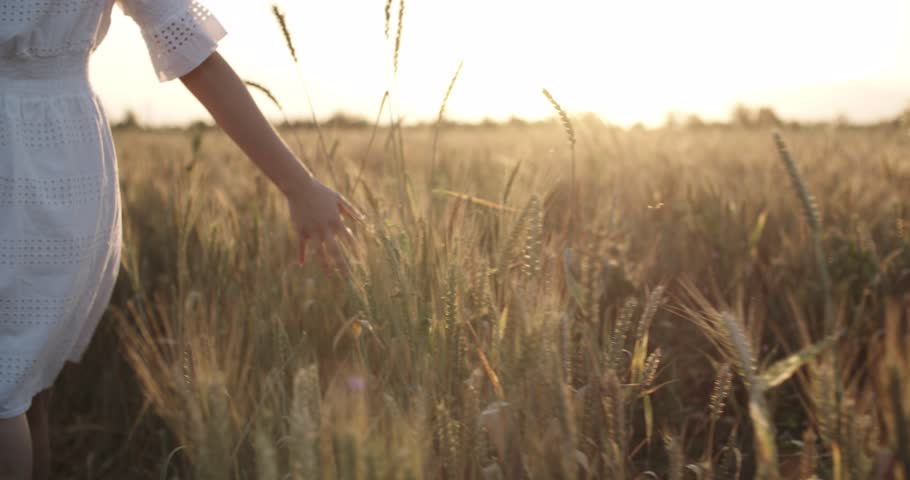 Beautiful girl running on sunlit wheat field. Slow motion 240 fps. close up.Sun lens flare. Freedom concept. Happy woman having fun outdoors in a wheat field on sunset or sunrise.Harvest