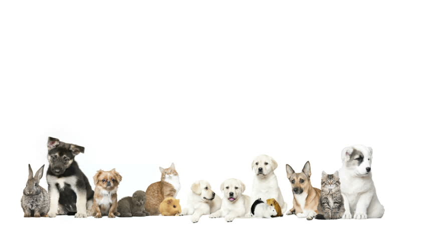 animals on a white background