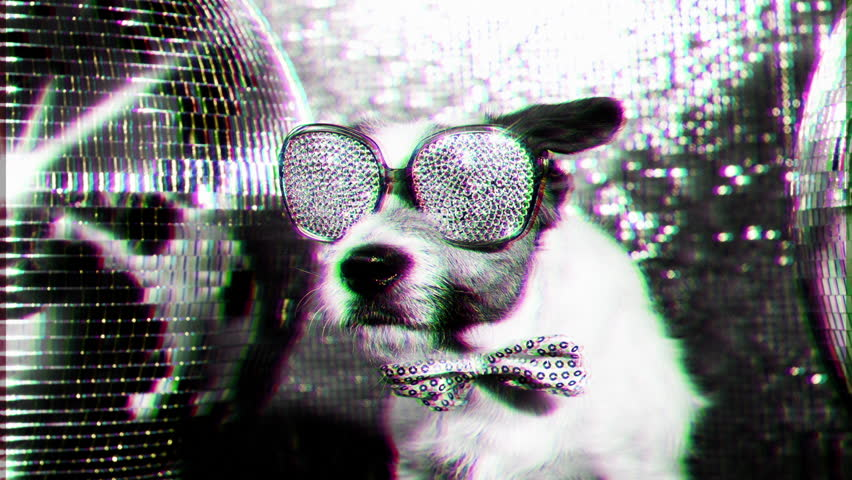 Cute jack russell dog with crystal covered sunglasses in a disco setting | Shutterstock HD Video #17565997