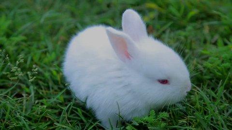 rabbit on green grass, white rabbit little rabbit, Little white bunny