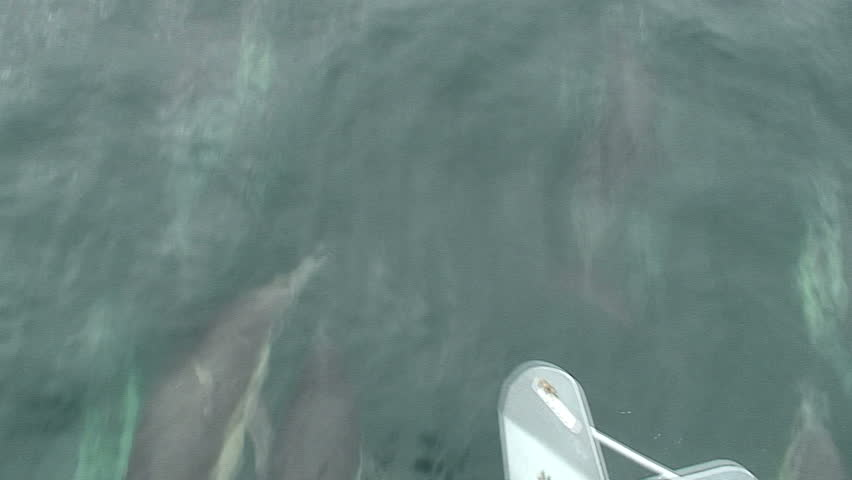 Close-Up to Zoom-Out: Dolphins Jumping #1767686