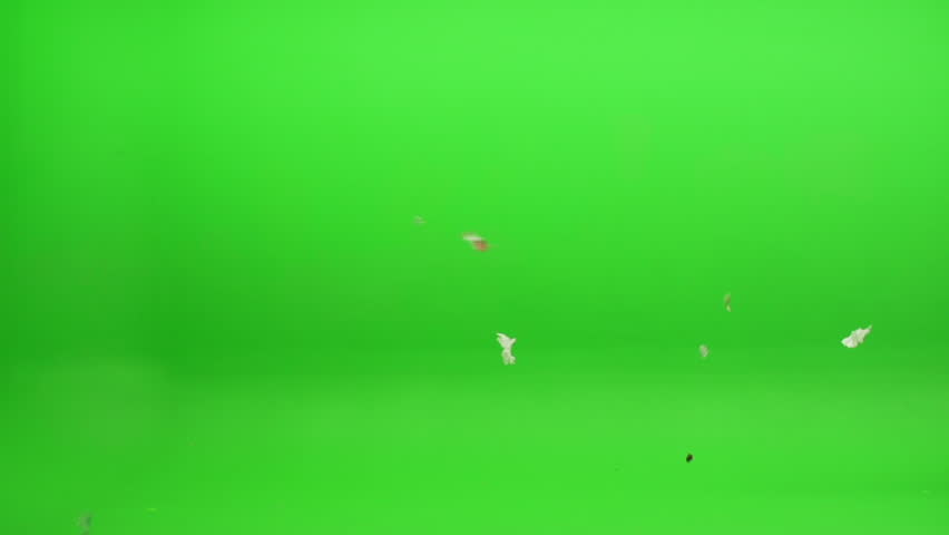 Green screen shot. Foreground element of trash, leaves and other various debris blowing in the wind. Shot at 240 fps.