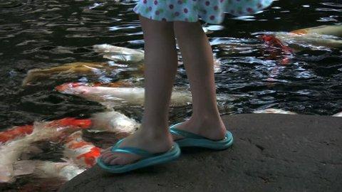 girl feeds koi fish