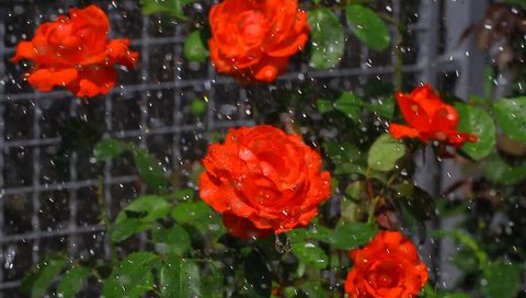 Los Angeles Flower District Series Stock Footage Video 100 Royalty