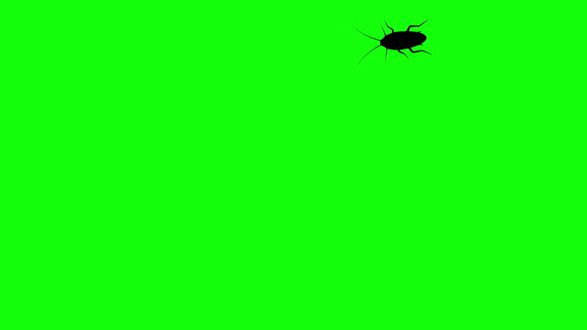 Cockroach on green screen, CG animated silhouette, seamless loop