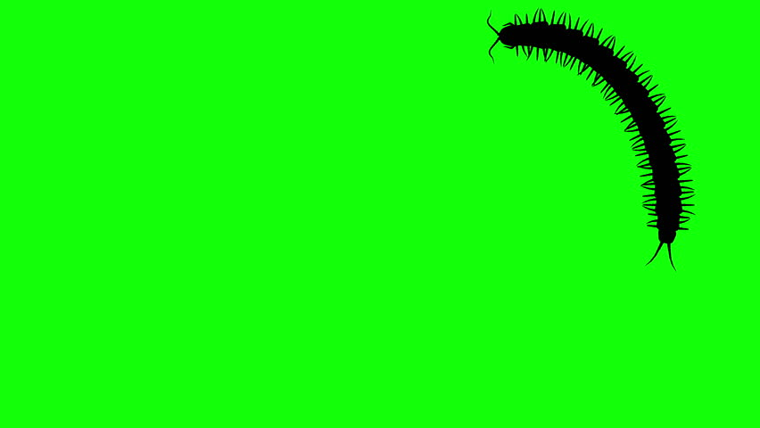 Centipede on green screen, CG animated silhouette, seamless loop