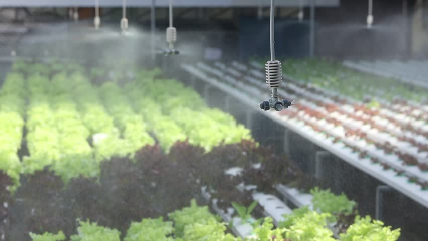 water springer at organic vegetable farm , Hydroponics vegetable