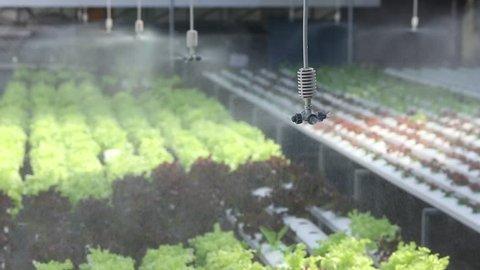 water springer at organic vegetable farm , Hydroponics vegetable