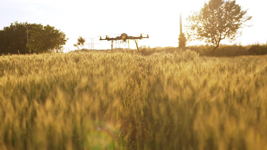Drone flying low above field at sunset. Slow motion.