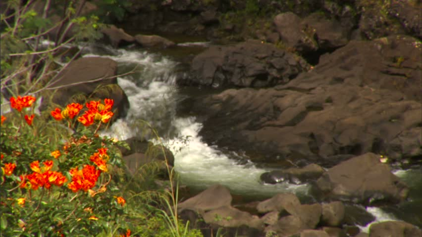 Boiling Pots, stream, Hawaii, flowers, nature, rocks,