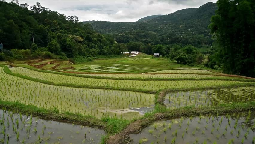 Rice terrace | Shutterstock HD Video #18240157