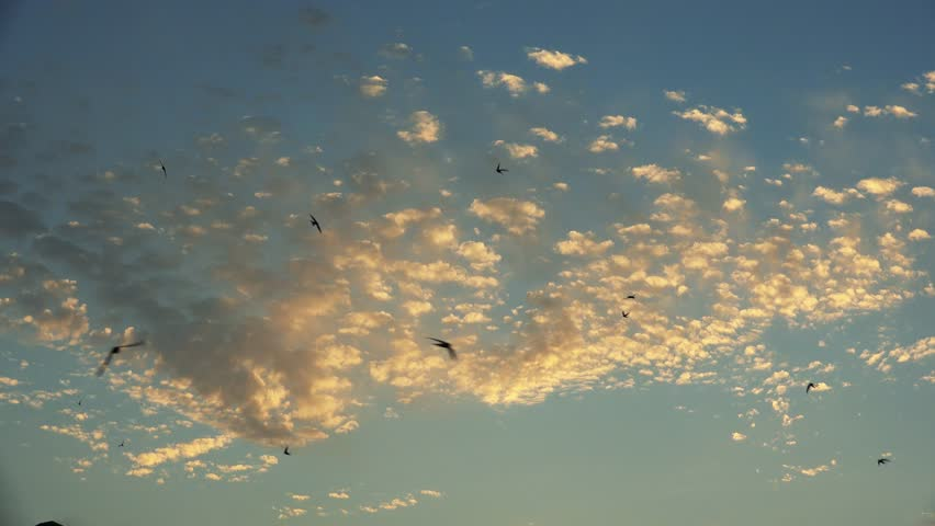 Image result for blue skies with swifts