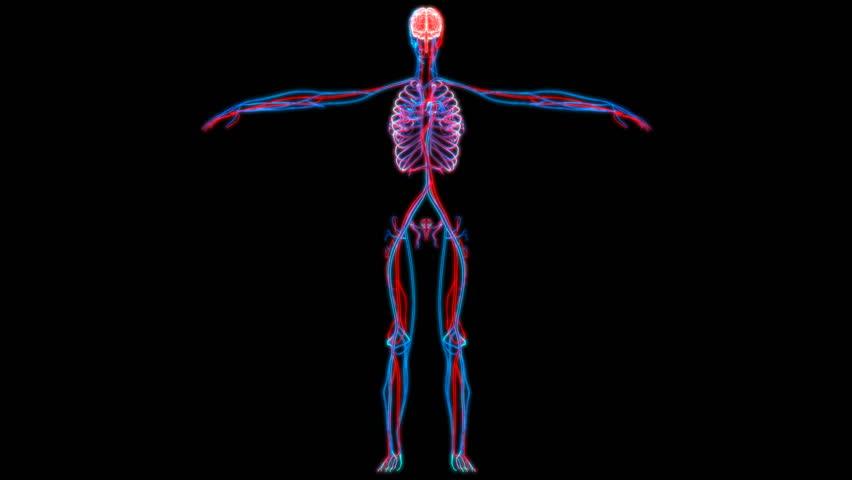 Human Brain with Circulatory System. 3D | Shutterstock HD Video #18395167