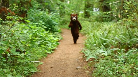 A bear skips down a nature path and gets tackled by a skunk